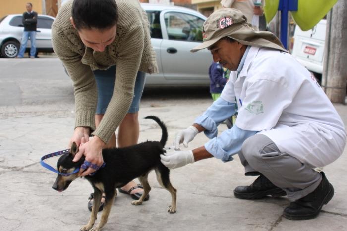 vacinação cães e gatos